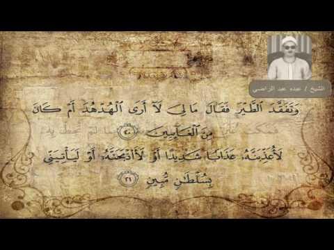 الشيخ عبده عبد الراضي سورة النمل وتفقد الطير فقال ما لي لا أرى الهدهد