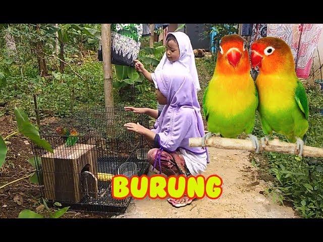 1010 Foto Gambar Burung Warna Warni HD