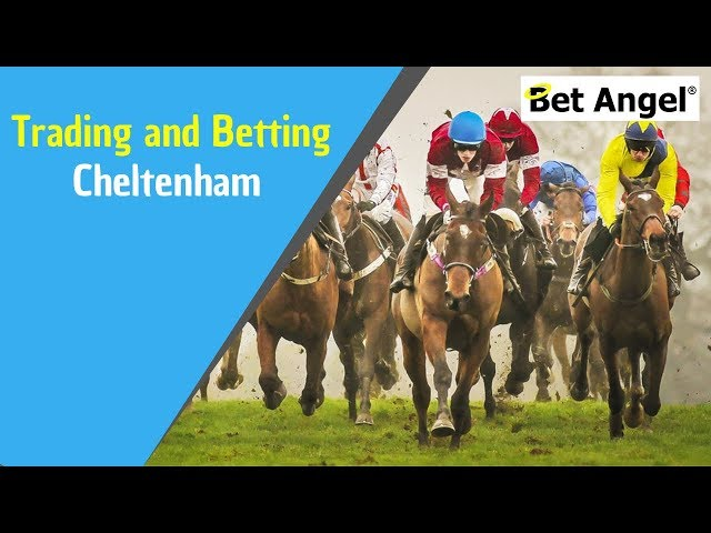 Betfair trading - The Cheltenham Festival - Exclusive content available