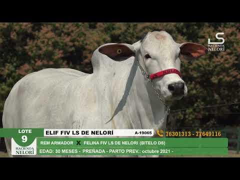 Lote 9 Elif FIV LS