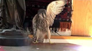 NYC NEEDS A WILDLIFE REHAB CENTER !!!! WILD BIRD FUND
