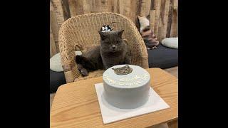 TikTok Special Petissier.sg x MeoMi ( Singapore ) Don't Touch My Cake !