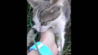 Тигрик-котик