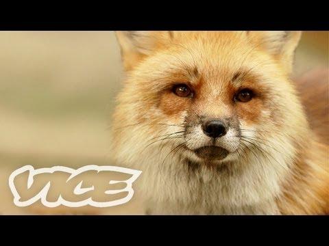 キツネ100匹! - Fox Village