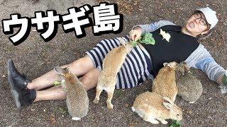 うさぎ島でウサギに埋もれてみた!廃墟にもウサギが!? HIKAKIN 検索動画 23