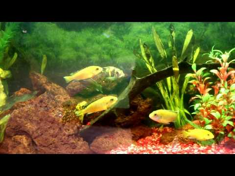 These FISH love classical music - Nature, CANADA