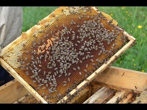 фото злая пчела
