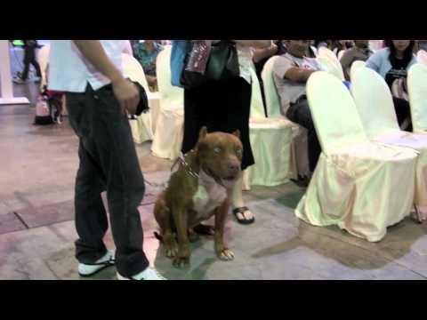 รวมภาพสุนัขน่ารักในงานโชว์น้องหมา