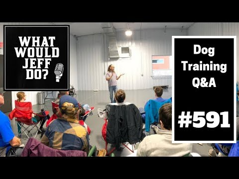 Dog Training - New Dog Trainer Tips - Barking Dogs - What Would Jeff Do? Q&A  Ep.591 (2019)