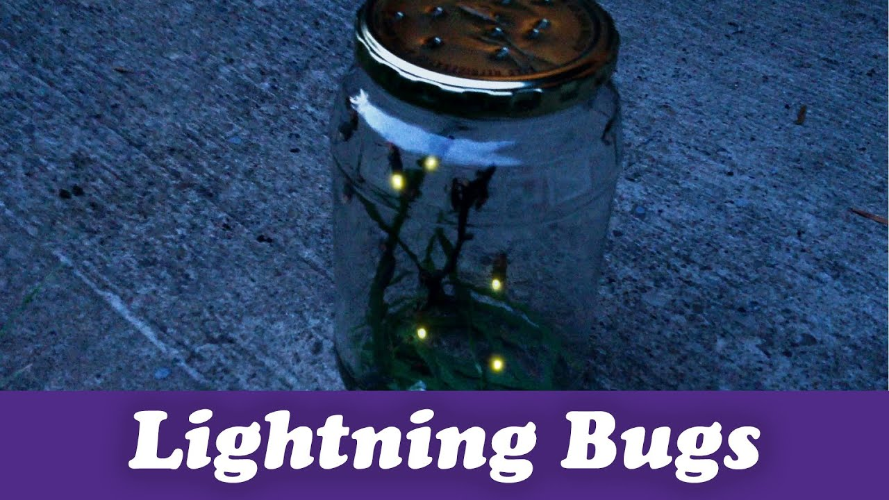 How to Catch Lightning Bugs