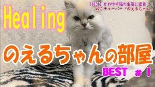 【ねこBEST#1】子猫『のえるちゃん』の癒し生活を一挙公開! thumbnail