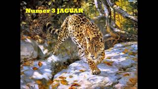 Polowanie - sawanna - drapieżne ssaki