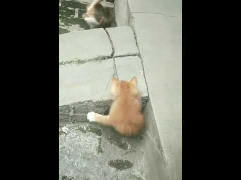Kittens playing hide and seek