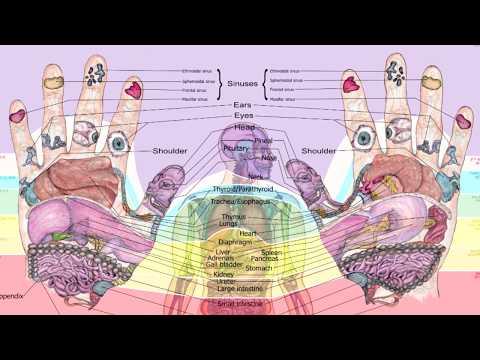 Balancingtouch's Reflexology Hand Chart
