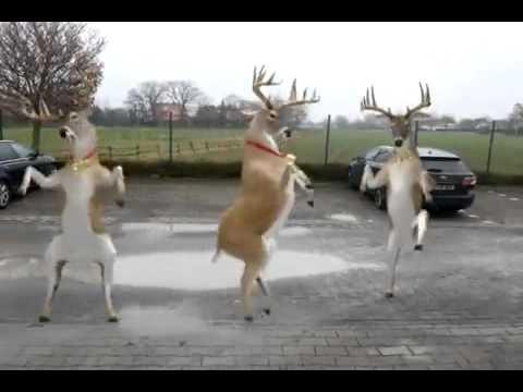 Video renne di Natale