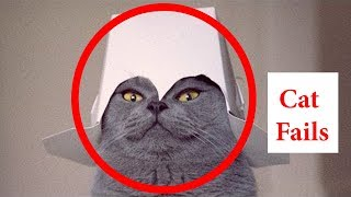 Funny Cat Fails Video: Try not to Laugh - Hilarious Cat Videos | Part - 1