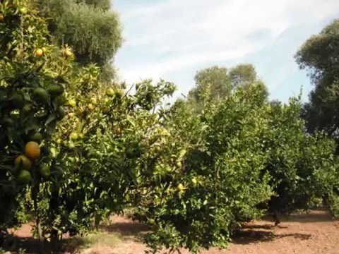 cosy Country Property for sale in southern Spain/Andalusia