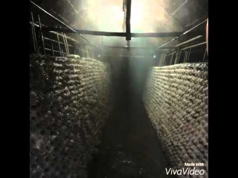 ระบบถูกต้อง โรงเรือน ระบบน้ำ ความชื้น ร้อนขนาดไหนก้อนเห็ดก็ผลิดอก