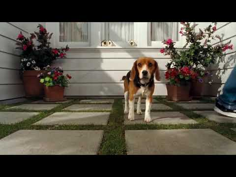 Cats and dogs Hollywood dubbed comedy