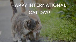 Turkey.Home - Happy International Cat Day!