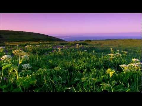 Видео обои - Луговые цветы