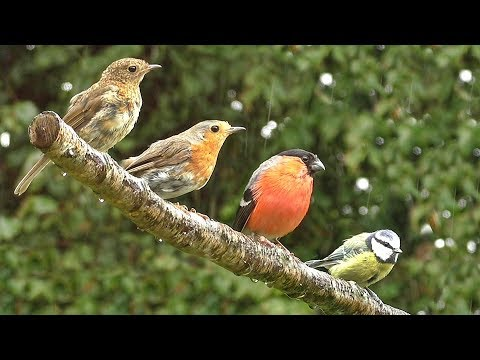 Birds Relaxation Sounds and Beautiful Video
