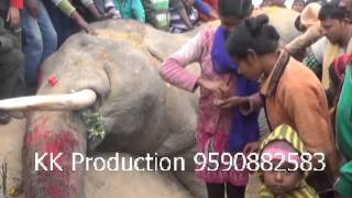 Electrocution killed Elephant in Bankura WB