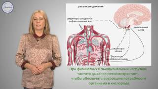 Биология 8 класс. Регуляция дыхания.