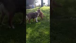 Very funny dogs!  Must see!