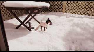 20140216_昨日からの記録的大雪の中、どうしても新しいオモチャのアヒル...