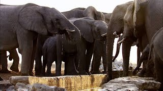 Drama Erupts Between Two Elephant Families