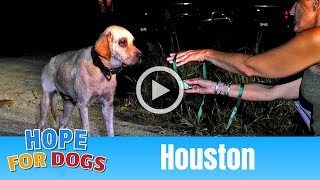 Hope OutSmarted by Hungry Houston Homeless Dog  The Rescuers DNA