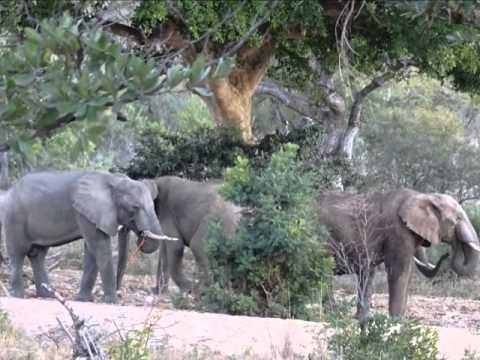 Sawabona South Africa