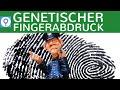 Genetischer Fingerabdruck - RFLP-Methode & STR-Methode einfach erklärt - Vorgehensweise | Gentechnik