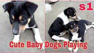 S1: Two Baby Dogs Playing | Cute and Funny Dog Videos | 1st Size | Pet Animal's Video