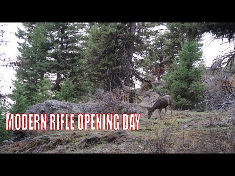 WASHINGTON STATE MULE DEER HUNTING - OPENING DAY 2019