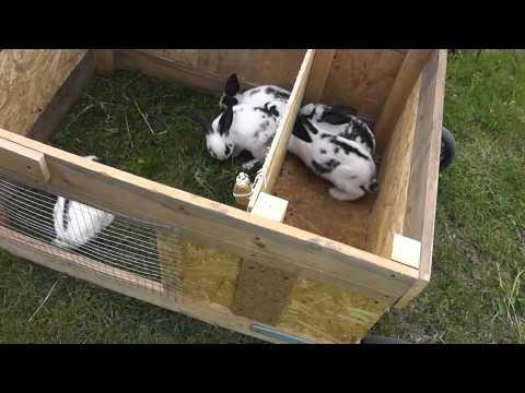 видео: Передвижной крольчатник своими руками