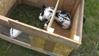 Передвижной крольчатник своими руками