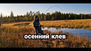 Рыбалка для души. Столько щуки я ещё не ловил. осенняя природа Архангельская область.