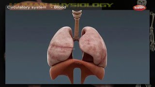 Video Circulatory System | How Human Body Works | Human Body Parts and Functions | Human Anatomy 3d download MP3, 3GP, MP4, WEBM, AVI, FLV Juli 2018