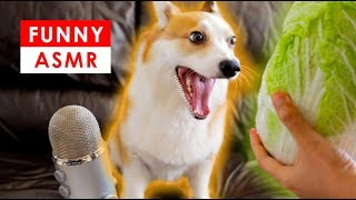 FUNNY ASMR - DOG EATING CRUNCHY SOUNDS | Mukbang