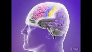 How Partial Seizures are Affected by Their Location in the Brain