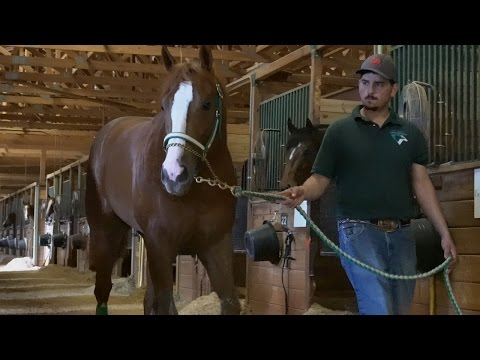 Inside the Remington Park Futurity with Janet VanBebber