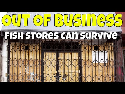 How Aquarium Co-Op Is Thriving While Many Fish Stores Are Dying!