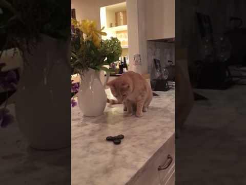 Cat Spins Finger Spinner