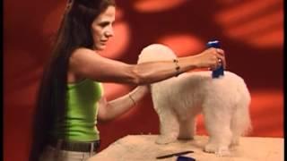 Dog Grooming - Pet Trim - Bichon Frisé