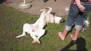 dog training how to teach your dog play dead