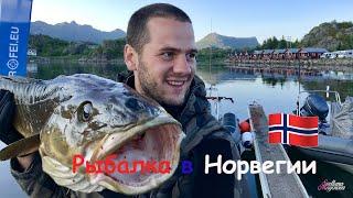 Рыбалка в Норвегии Лофотенские острова Треска