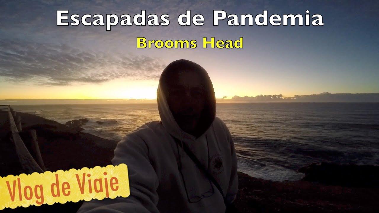 brooms head