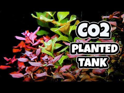Beginner CO2 Planted Tank Setup